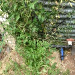 Irrigation fittings with tomato & sweet pea